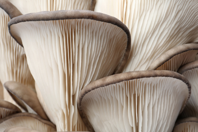 Why fermented mushrooms?